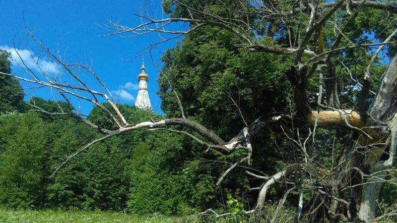 Огромное засохшее дерево.