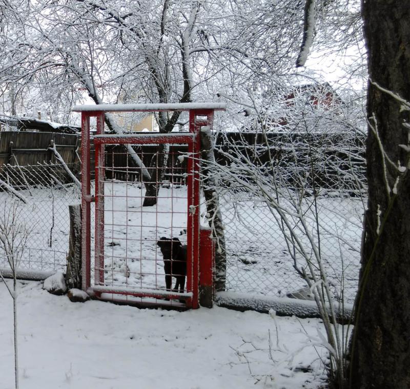 Утро встретило толстым слоем снега. Из двух псов только один решил меня поприветствовать, второй отказался покидать будку.
