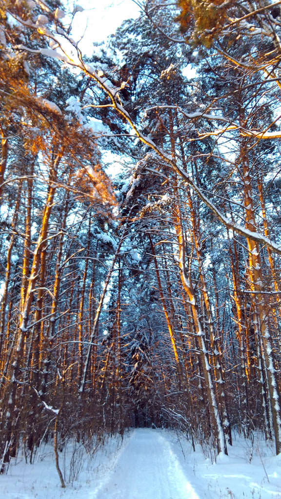 Тропинка через белостолбовский лес.
