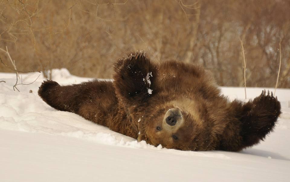медведь в берлоге фото животного своих