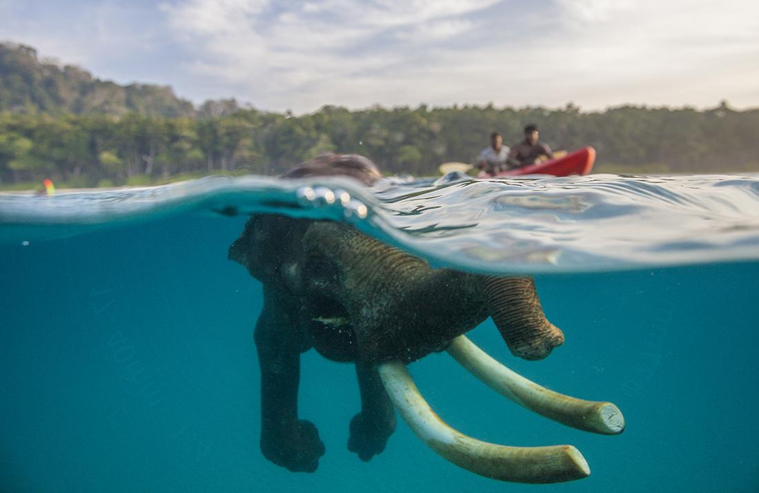 случае картинка плывущий слон успех