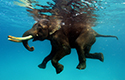 В океане под слоном