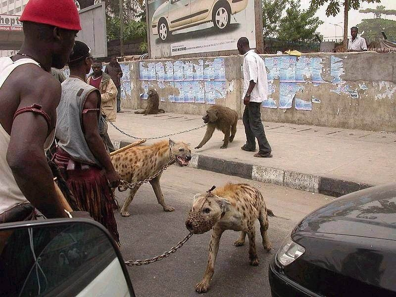 the-hyena-and-other-men-pieter-hugo-6