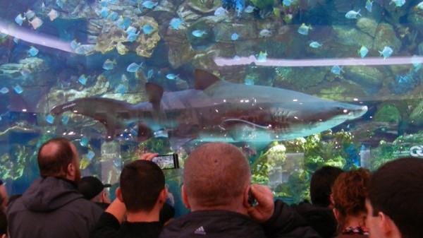Акулы В киеве