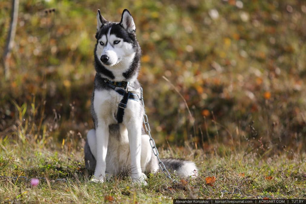 20131006_0683_korsakov_(c)_www-korsart-com