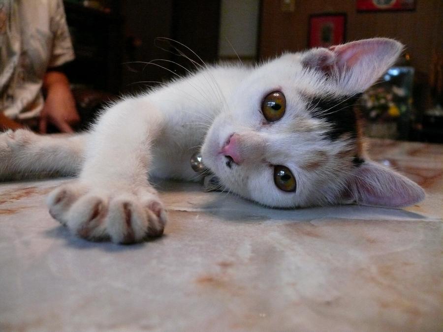 коты 15