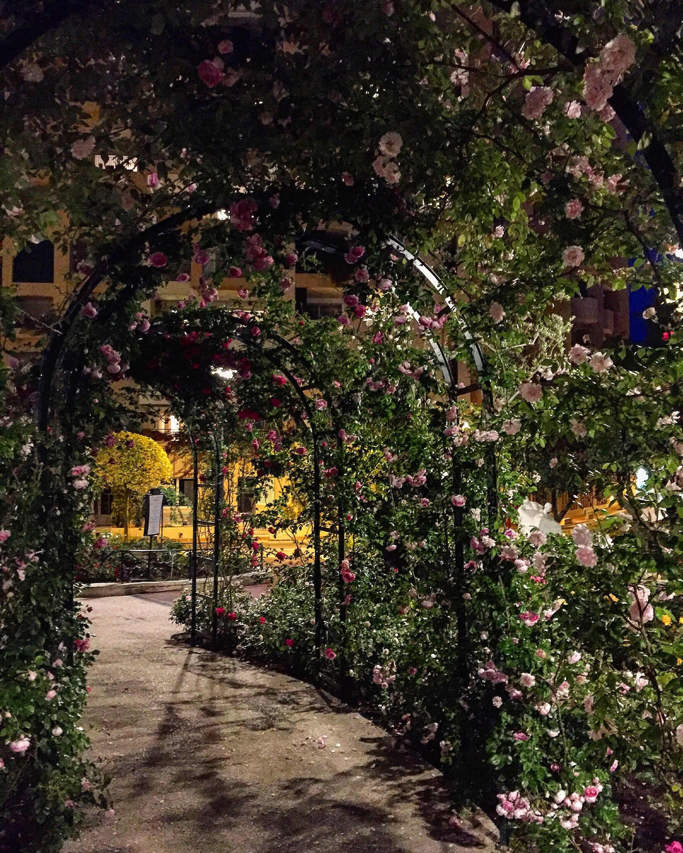 Картинки сада с цветами ночью