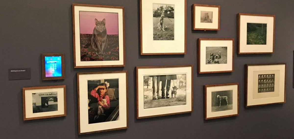 9-Выставка Паническое бегство - животные в искусстве.jpg