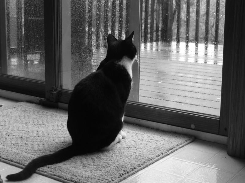 кошачья грусть.jpg