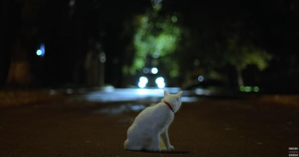 Котейка 1.jpg