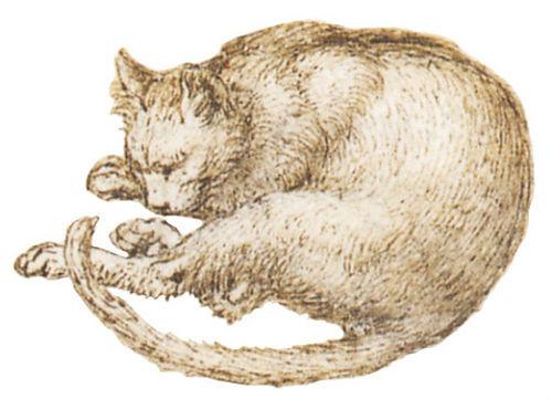 Леонардо да Винчи - Кошка (рисунок).JPG