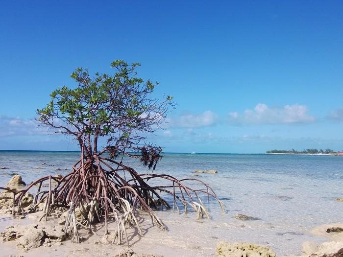 Bahamas-20.jpg