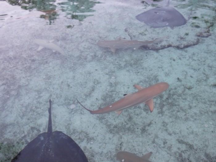 Bahamas-22.jpg