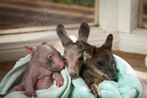 Marsupial-Trio-630lc101512