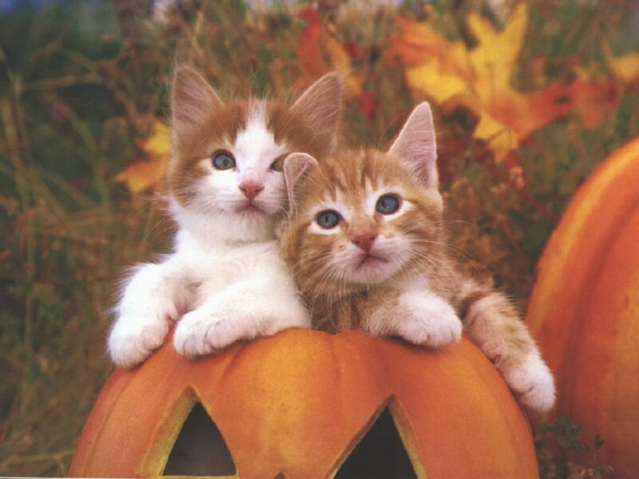 cats_photo_16