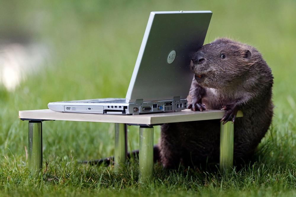 Пожелан, прикольная картинка с ноутбуком