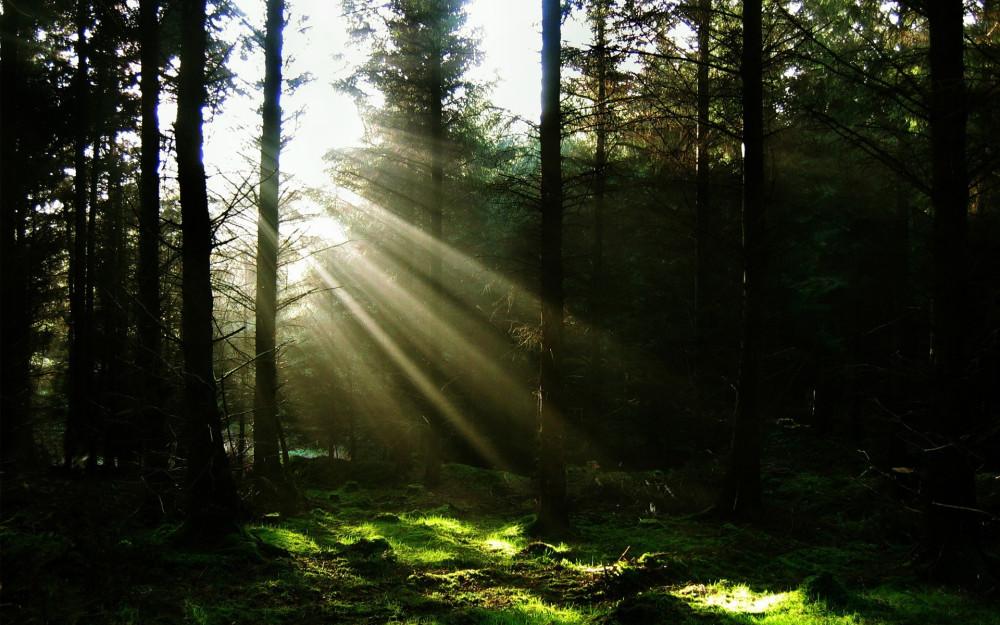 Психологический тест:Прогулка в лесу - YouTube