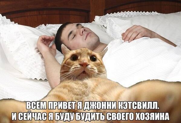 catsvill-budit-hozyaina