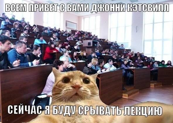 catsvill-cryvat-lekciu