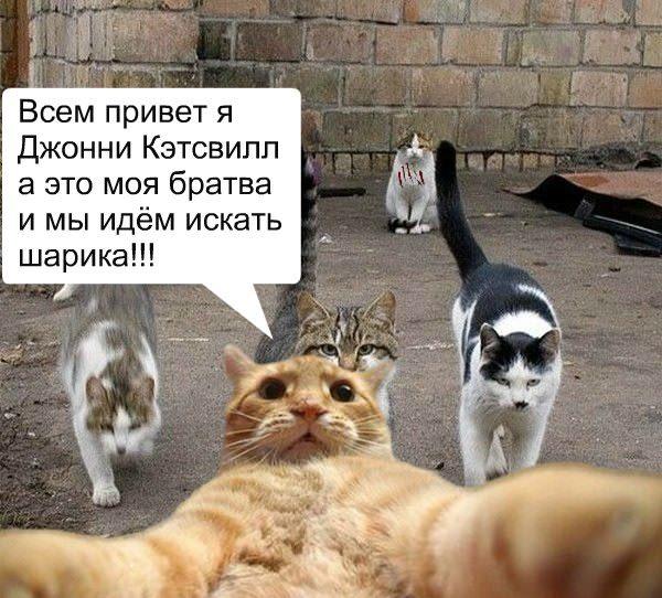 catsvill-idem-iskat-sharika