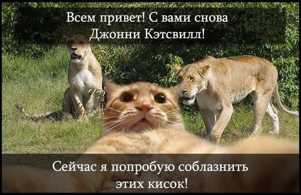 catsvill-i-lvicy1
