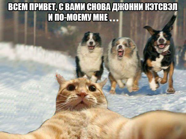 catsvill-mne-konec