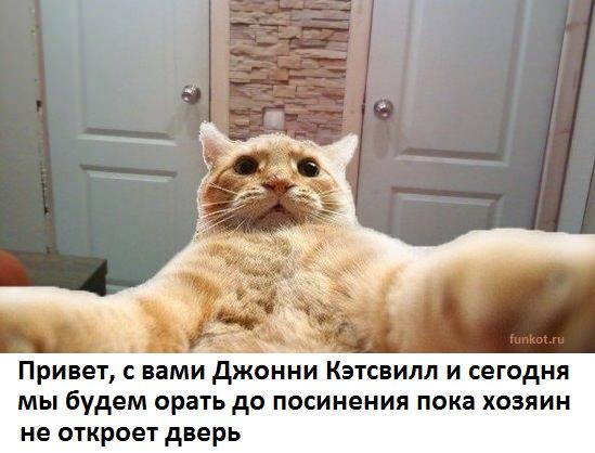 catsvill-otkroi-dver