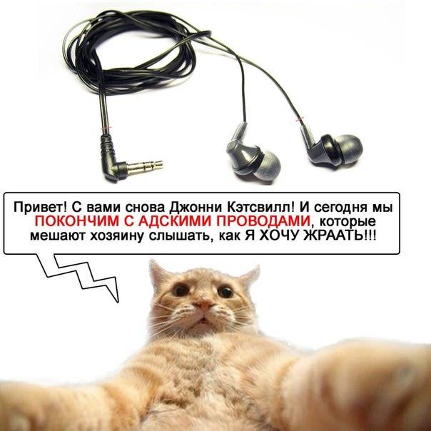 catsvill-pokonchit-s-provodami