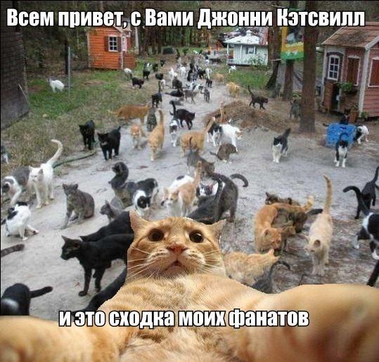 catsvill-shodka-fanatov