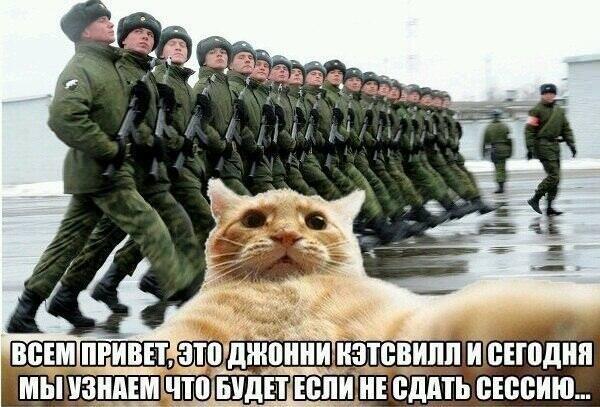 catsvill-v-armii
