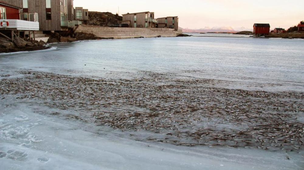 mar-congelado-mata-peces-3
