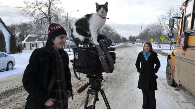 camera-cat-edmonton-8