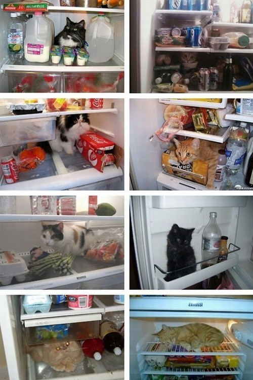 funny-food-photos-my-food-looks-funny-whats-in-your-fridge