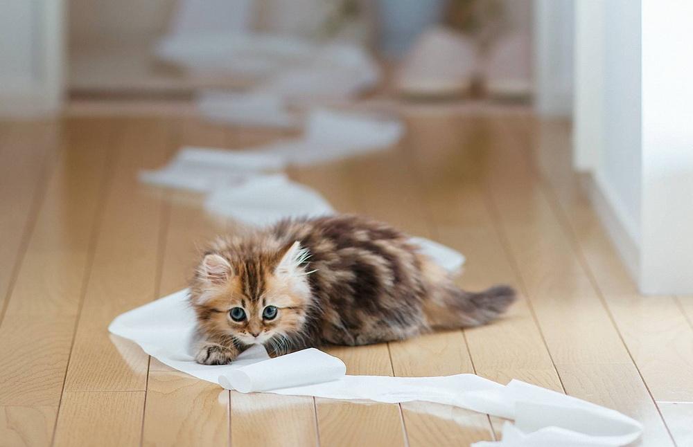 Daisy_kitten_3
