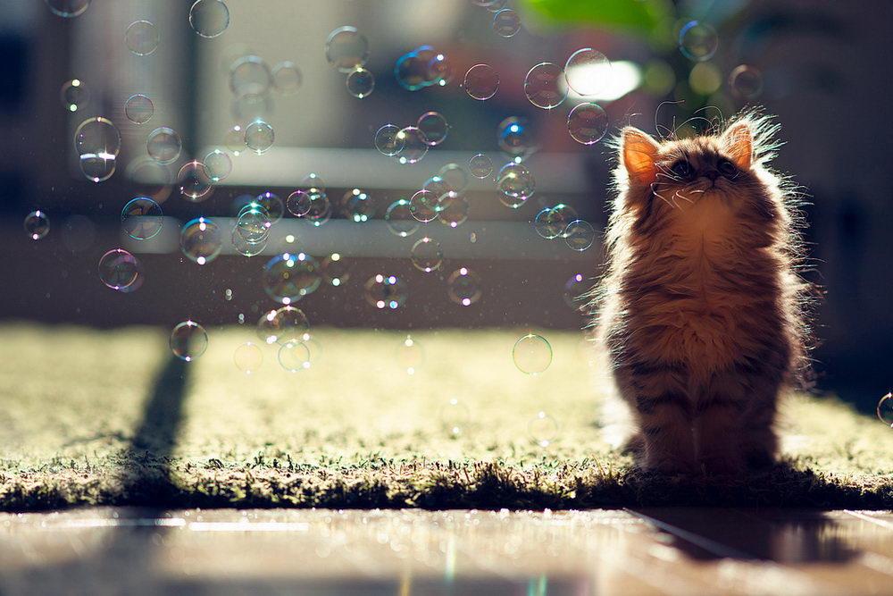Daisy_kitten_4