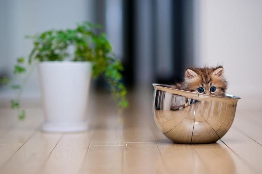 Daisy_kitten_5