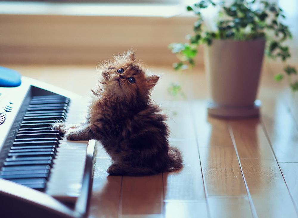Daisy_kitten_7