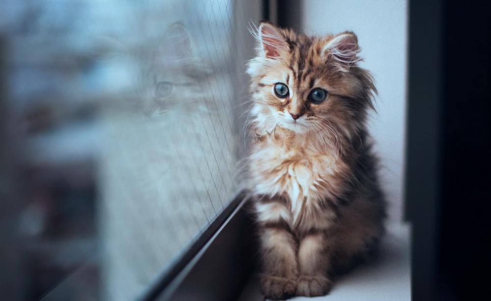 Daisy_kitten_8