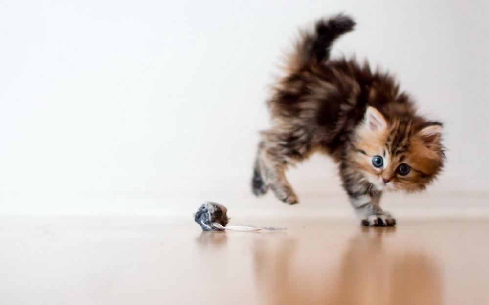 Daisy_kitten_9