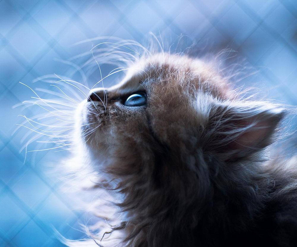 Daisy_kitten_12