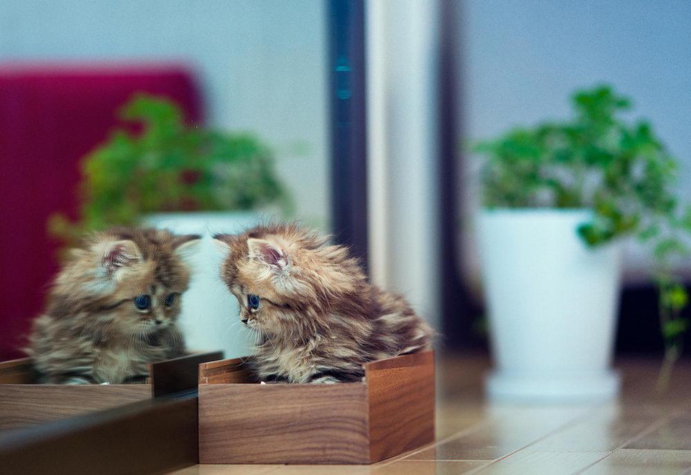 Daisy_kitten_13