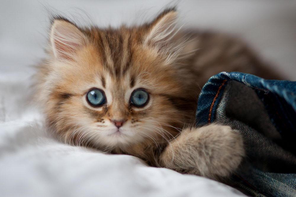 Daisy_kitten_14