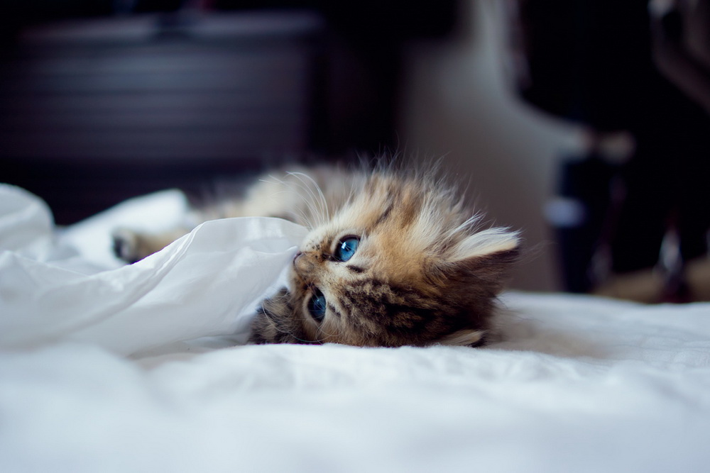 Daisy_kitten_15