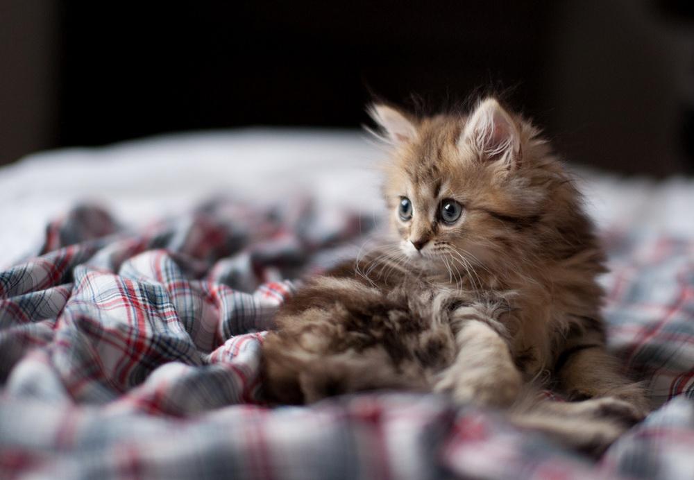 Daisy_kitten_18