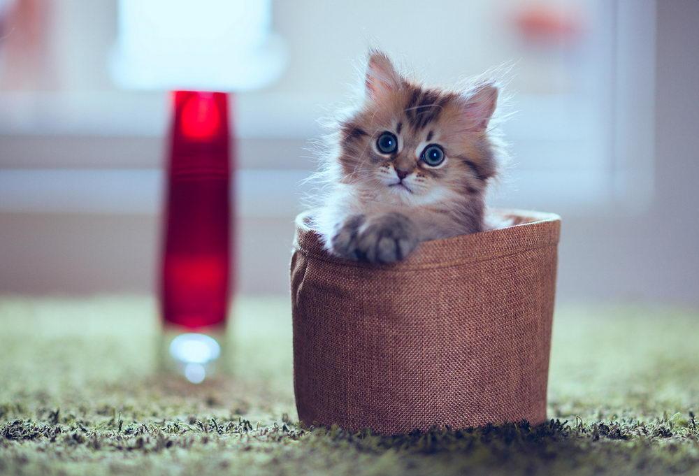 Daisy_kitten_20