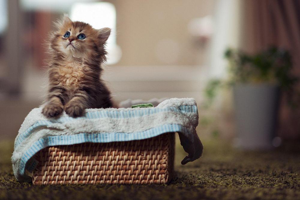 Daisy_kitten_22