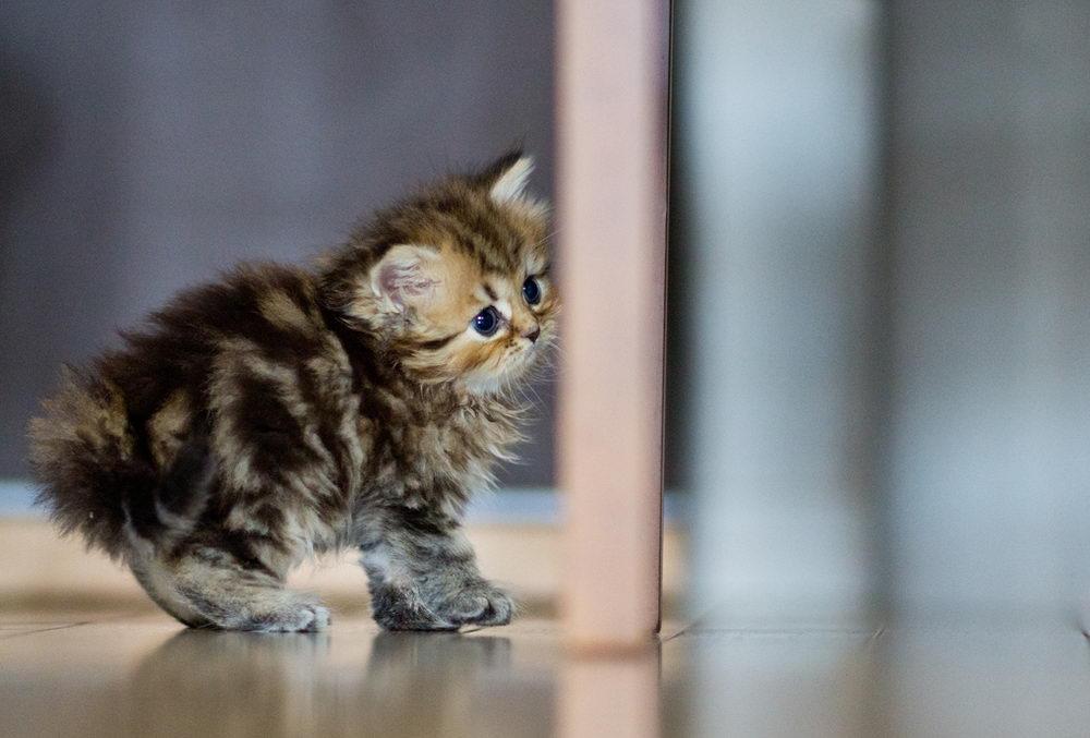 Daisy_kitten_23