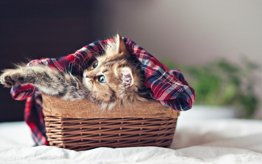 Daisy_kitten_25