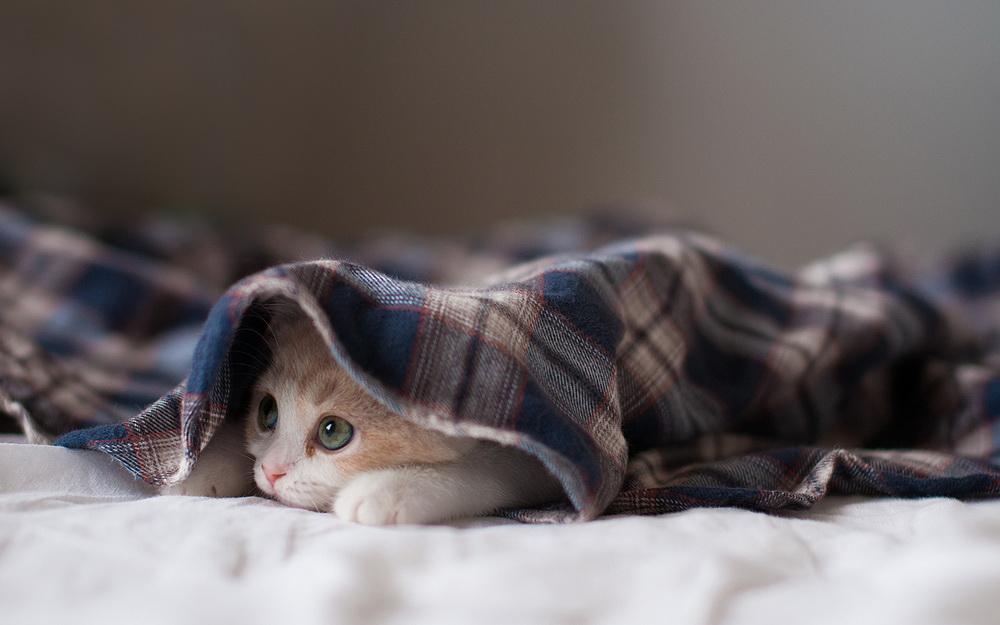 Daisy_kitten_27