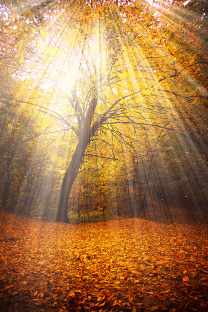autumn-beautiful-fiary-tale-forest-light-Favim.com-242087